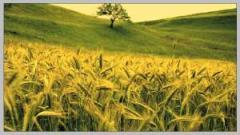 Cereale si plante tehnice.