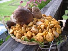 Ciuperci - Galbiori