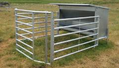 Bunker with a single access for cattle