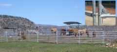 Gard bovine