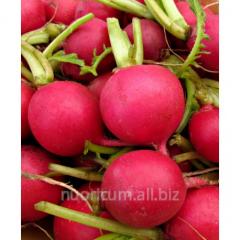 Oil radish seeds