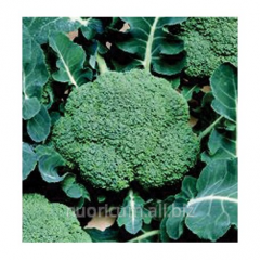 Seeds of broccoli