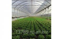 Greenhouse films