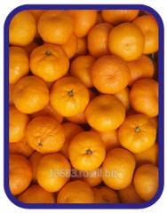 Mandarine - Satsuma 1