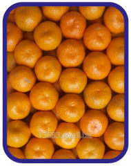 Mandarine - Satsuma 2