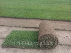 Soil for lawn