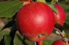 Pomi Fructiferi Idared