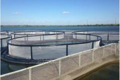Equipment for fish farming