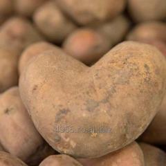 Cartofi roz