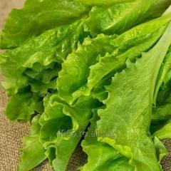Salata verde creata