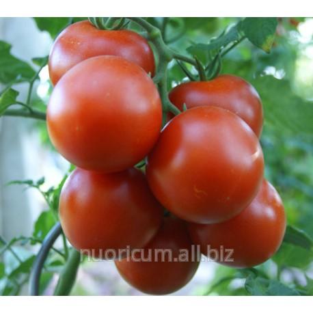 seminte_de_tomate_diverse_sortimente