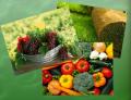 Ingrășămintelor organice 100 % naturale