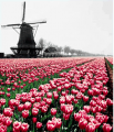 Bulbi de flori