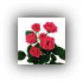 Flori.