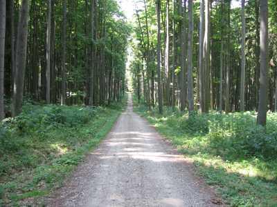 Comanda Amenajare drumuri forestiere