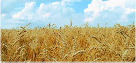 Comanda Comercializare cereale