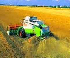 Comanda Cultura cerealelor, plante tehnice, seminte de cereale