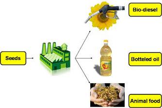 Comanda Procesarea seminţelor oleaginoase