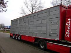 Transport in camioane pentru animale