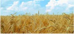 Comercializare cereale