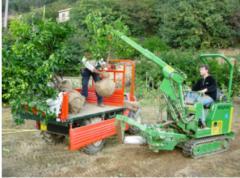 Servicii de intretinere de grădină