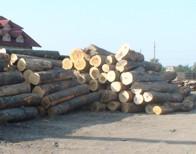 Exploatare forestiera si prelucrarea lemnului