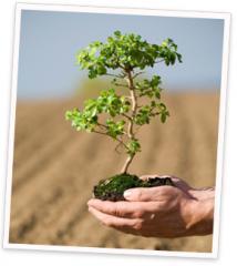 Plantari arbori arbusti