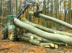 Exploatare forestiera