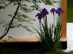 Amenajare de gradini, selectie de flori pentru partere de flori