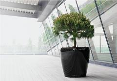 Decorarea spatiilor de interior cu plante naturale