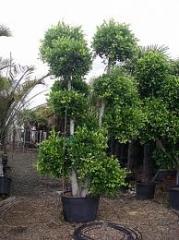 Plante de marimi exceptionale