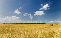 Terenuri arabile