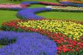 Floricultura ornamentala